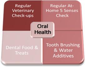 Oral Health Diagram